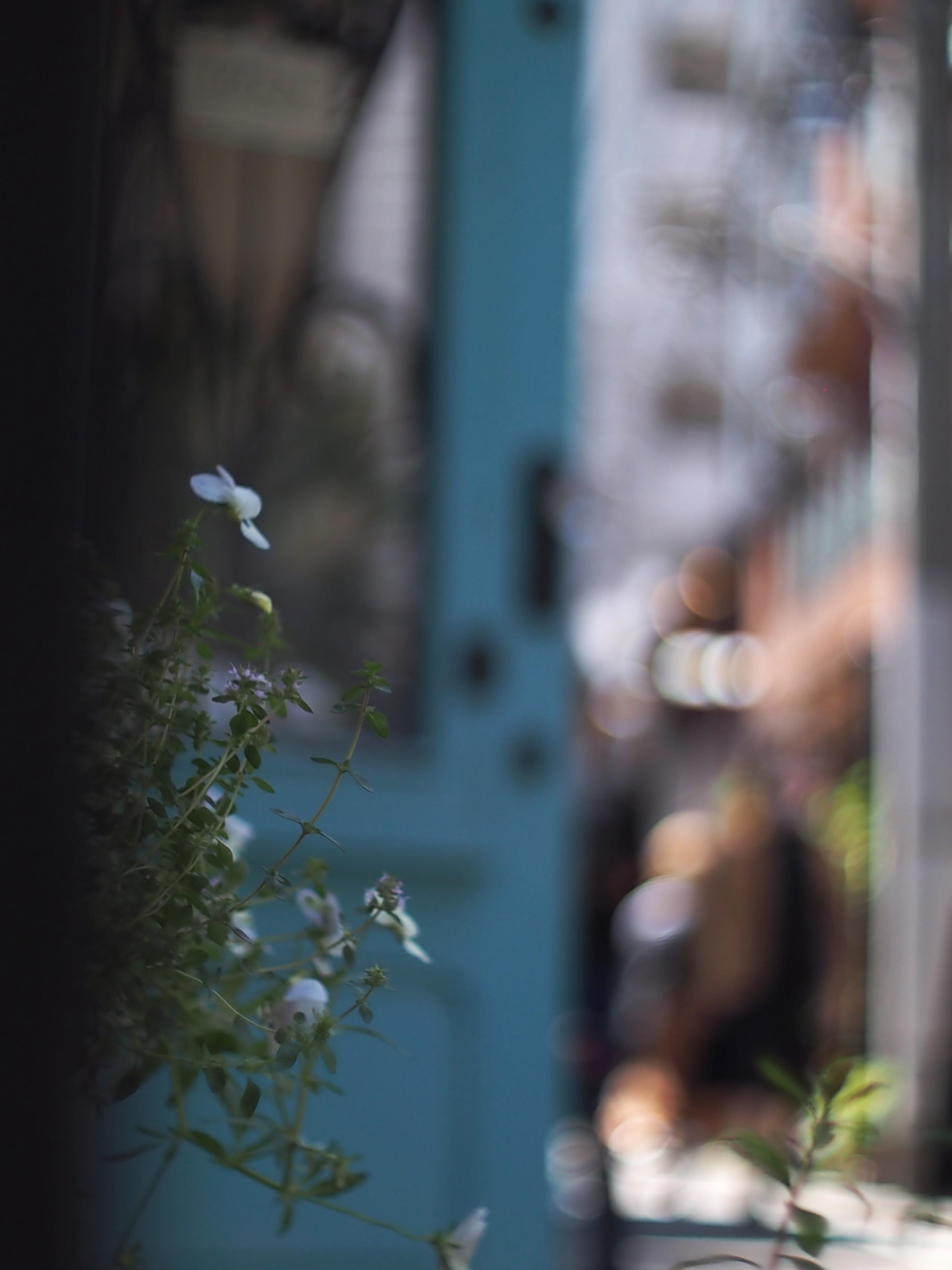 好物の青いドア.jpg