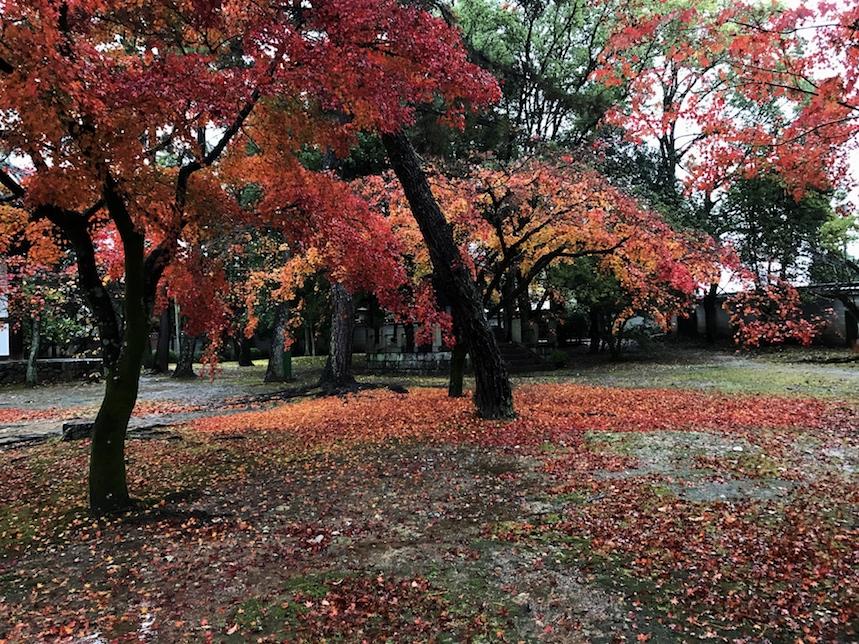 広隆寺im Regen.jpg