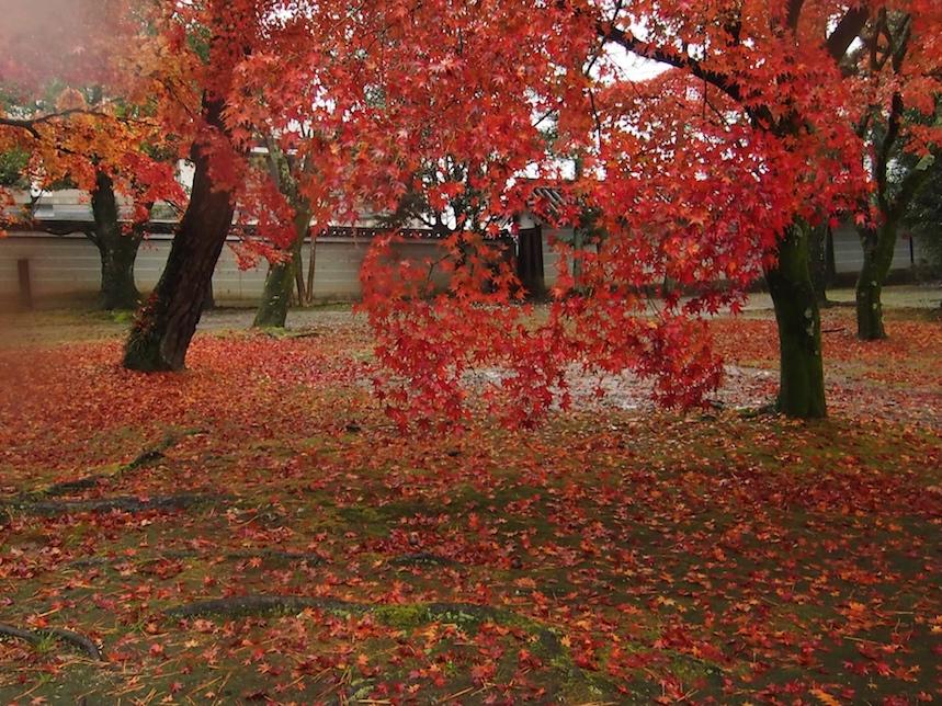 広隆寺im Regen2.jpg