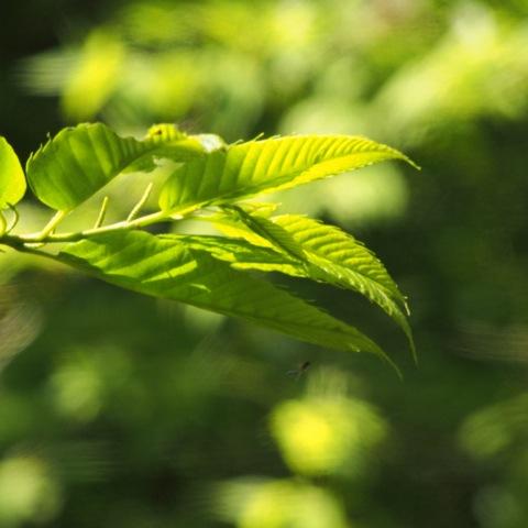 新緑1.jpg