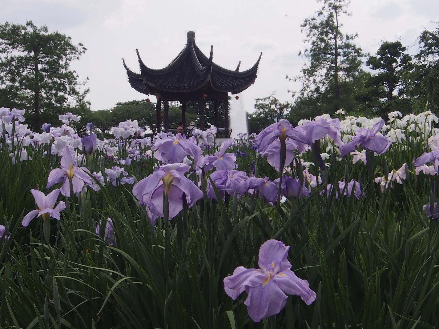 菖蒲水月公園3.jpg