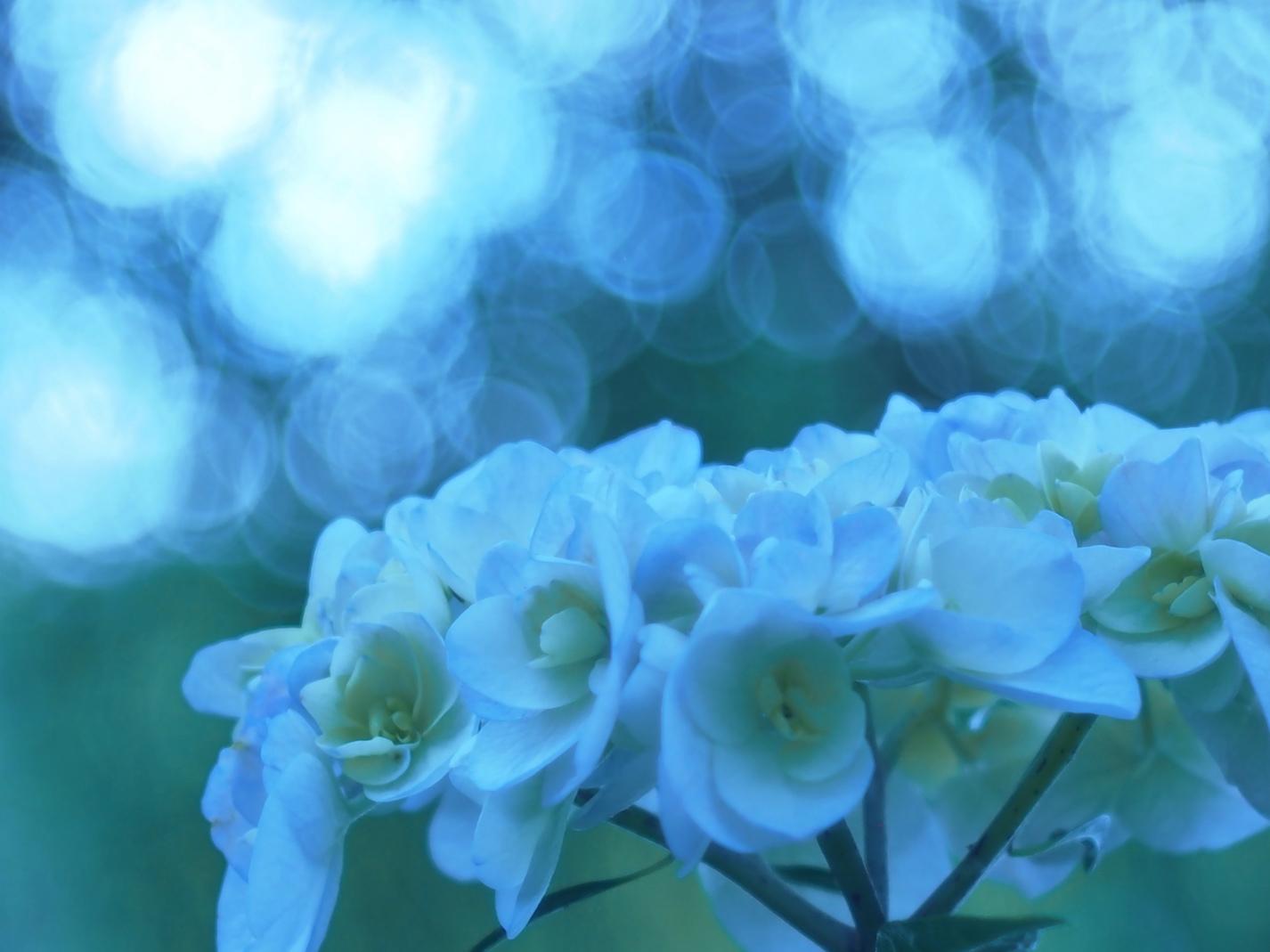 菖蒲水月公園5.jpg