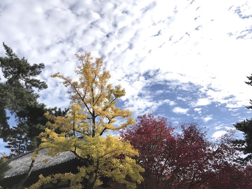 Herbstliche drei Farben.jpg