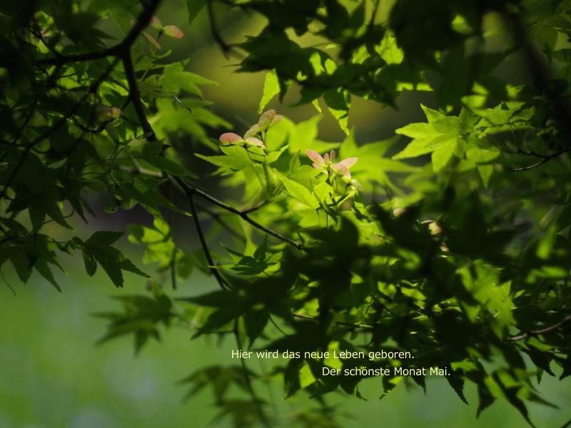 der schönste Monat Mai2.jpg