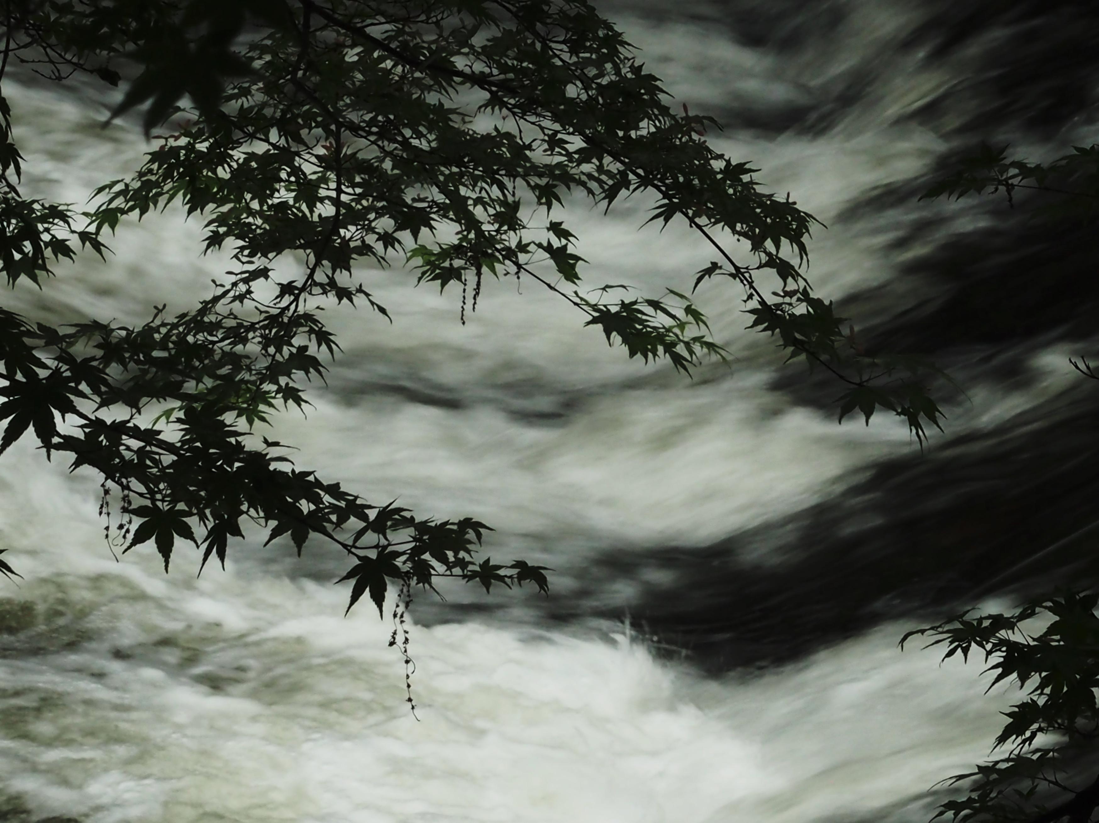 八瀬 Ahorn über dem Fluss.jpg