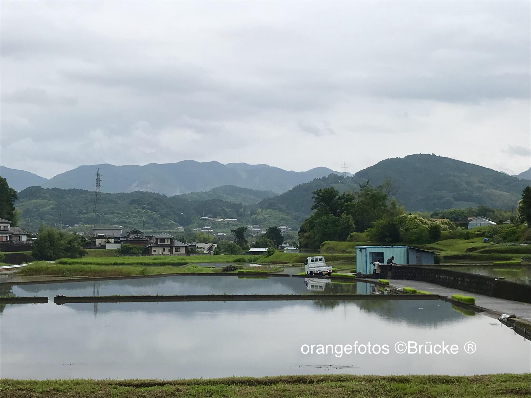 Reisfelder.jpg